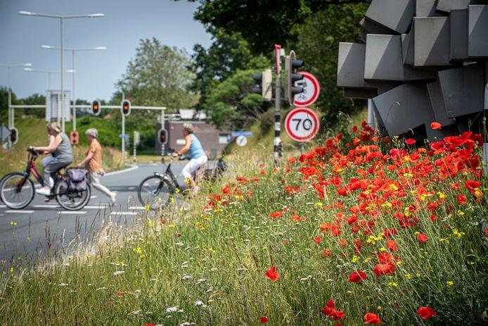De berm vol bloemen aan de Randweg in Bergen op Zoom.