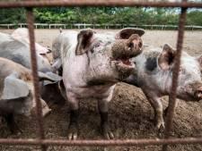 Varkens voor Zenderens keukenraam 'zijn schending van mensenrechten'