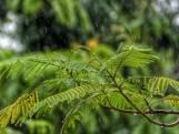 Verzuipen de planten? Neem deze maatregelen in je tuin