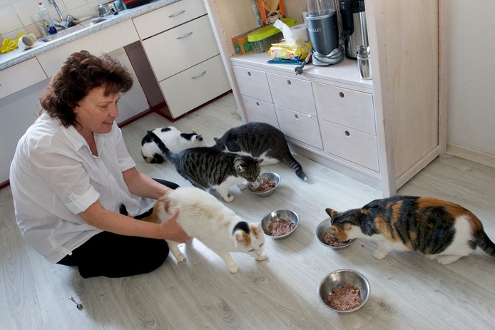"""Marjolein Schippers in Arnhem met vijf van haar zes katten. """"Mijn laatste geld zou ik aan mijn beesten geven."""""""