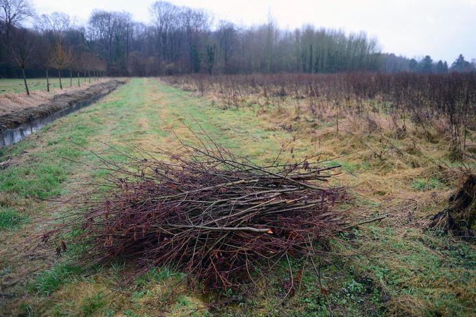 Het Weisetterbos in Kampenhout.
