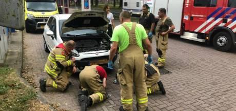 Duif zit klemvast in grill van auto na aanrijding: brandweer redt gewonde vogel