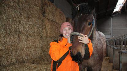 """Katrien is enige kandidate om erkend paardenvisser te worden: """"Ik ben kleiner dan het paard, maar schrik heb ik niet"""""""
