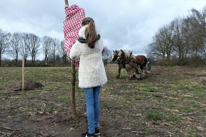 Kinderburgemeester Madelief onthult het bordje van voedselbos d' Ekkers, terwijl boer Paul met Belse knollen het land egt.