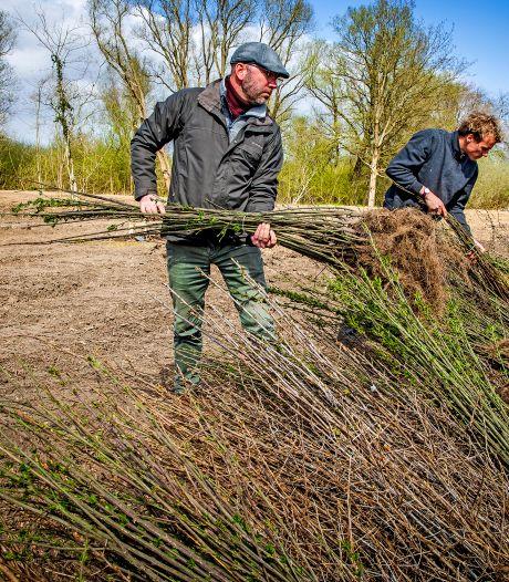 Duizenden nieuwe bomen geplant bij natuurbegraafplaats: 'Vier dagen bezig geweest'