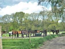 Ruiters maken met doneeractie aankoop van nieuwe pony's door Renkumse manege mogelijk