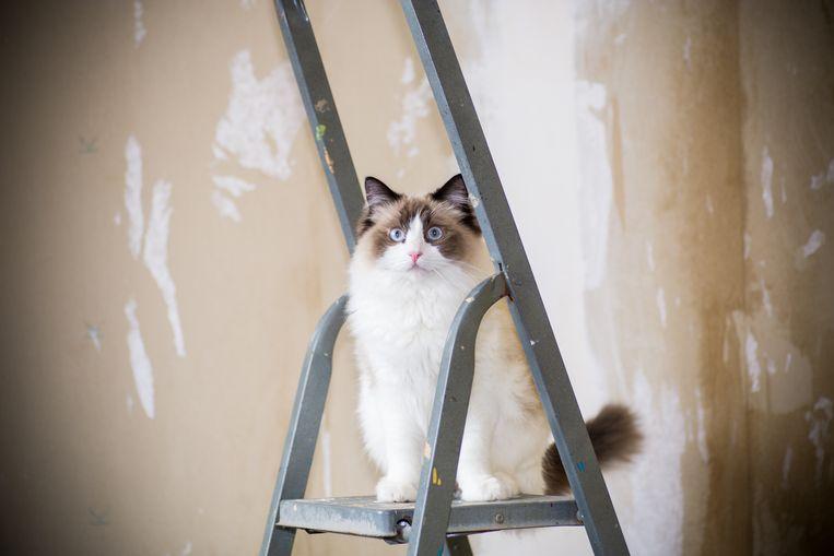 Hoe voorkom je dat je kat wegloopt of zich verstopt tijdens een verbouwing in huis? Beeld Getty Images/iStockphoto