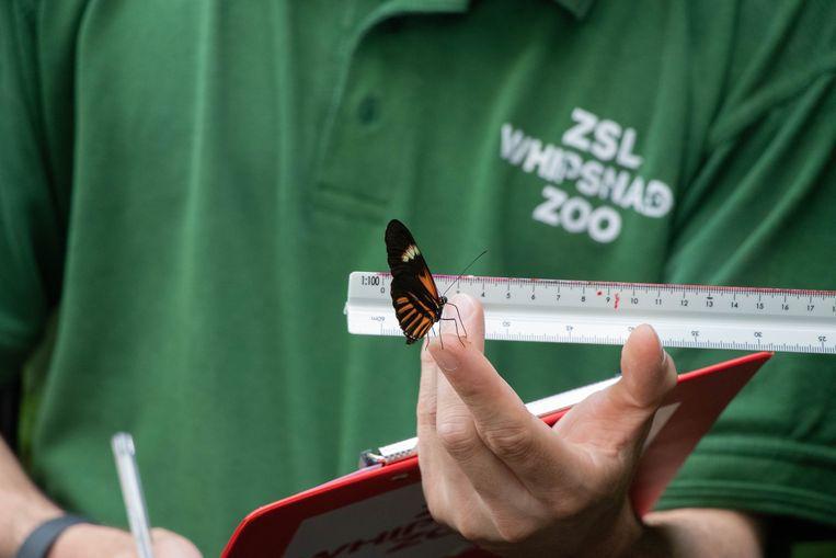 Kleinere bewoners zoals vlinders en spinnen hadden extra gevoelige apparatuur nodig om ze te wegen én meten. Beeld Photo News