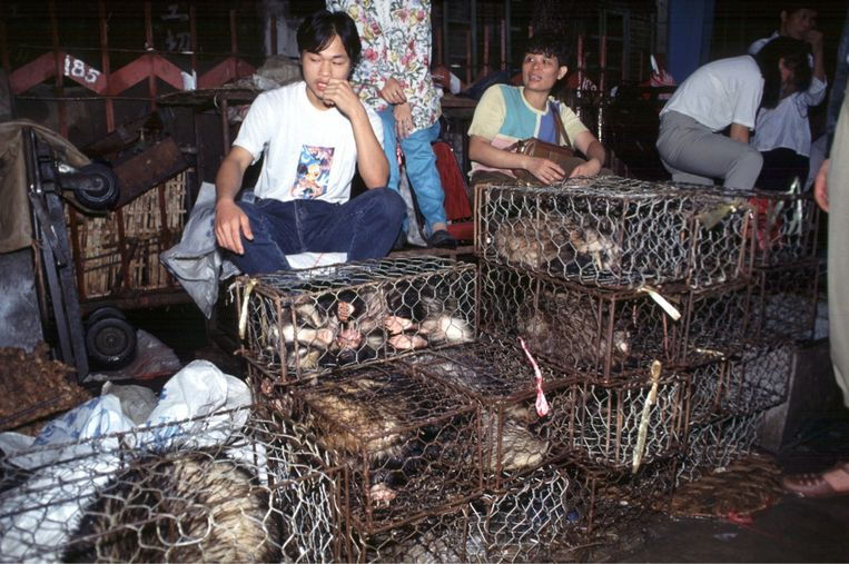 Een onderzoeker over de dierenmarkt in Wuhan: 'In de zon lag een soort smurrie: een mengeling van urine en uitwerpselen van allerlei soorten dieren. Een broeihaard voor bacteriën.' Beeld