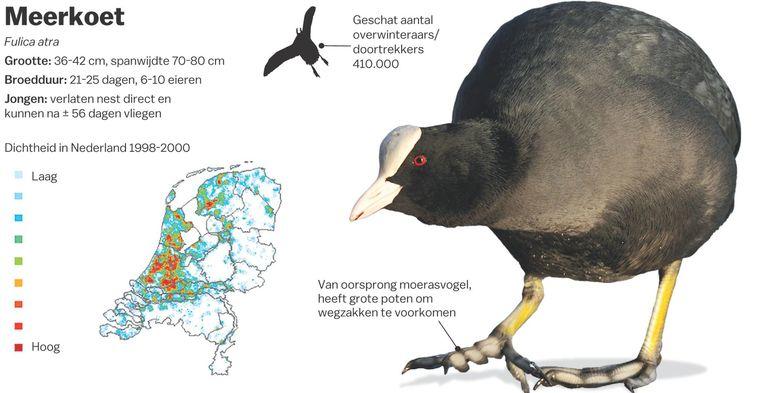 Bron: Vogelbescherming/Sovon Beeld Shutterstock/Laura van der Bijl