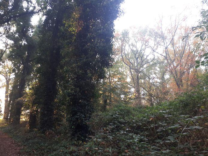 Bomenkap op Landgoed Steenenburg (het voormalige Land van Ooit) roept verzet op.