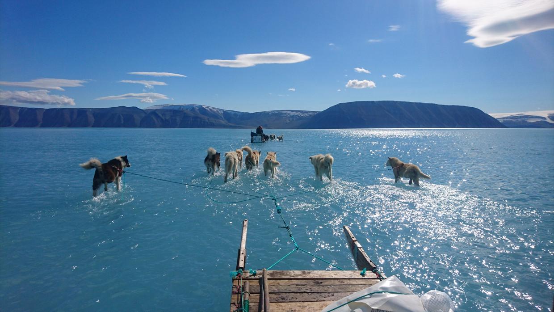 Sleehonden op een ijswatervlakte in Groenland. Beeld AFP