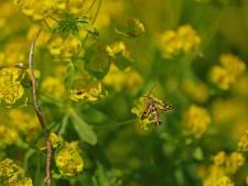 Pareltje op het groengele goud
