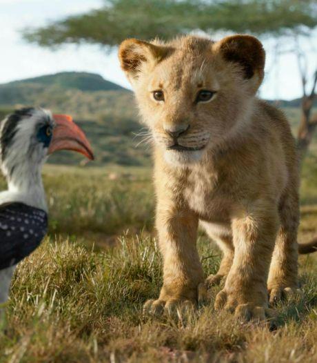 Een record voor de Lion King: binnen vier weken 2 miljoen bezoekers in Nederland