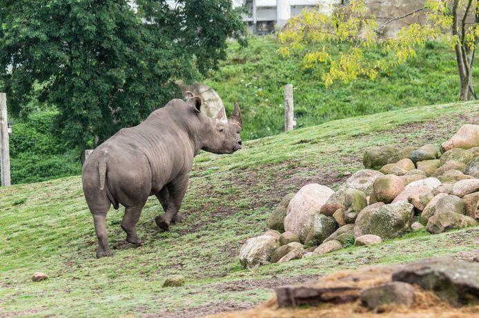 Limpompo en début de semaine, explorant la savane du parc animalier.