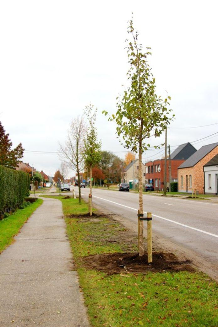 In de Dr. Van de Perrestraat werden al nieuwe bomen aangeplant.