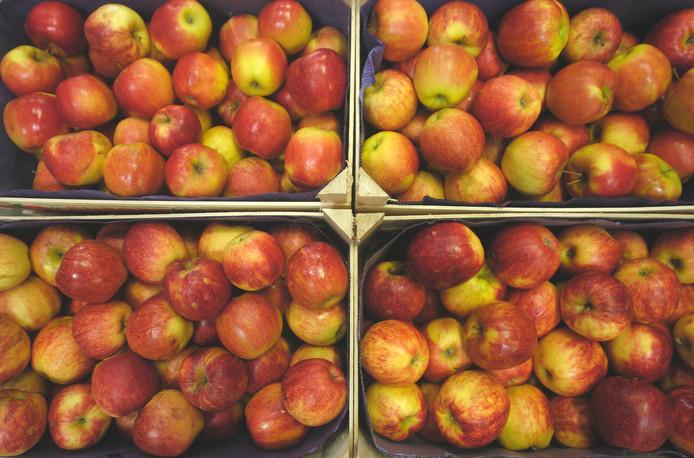 Het zijn vooral Oost-Europeanen die de appels en peren in Reimerswaal plukken.