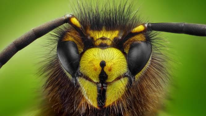 Waarom u dat wespennest beter laat hangen