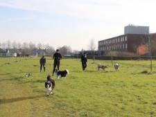 Liefhebbers maken zich sterk voor hondenspeelweide in Zaamslag