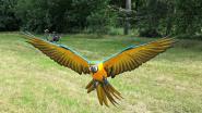"""Sympathisanten starten petitie na 'moord' op papegaai Rambo: """"Steunbetuigingen tot vanuit Australië"""""""