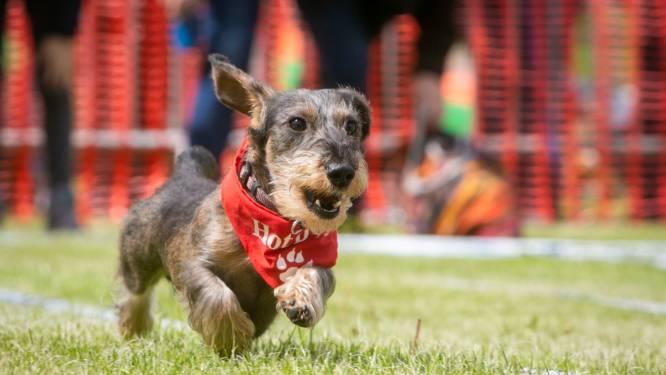 Hond verdwaald op vakantie: dier legt zelf weg naar huis af van bijna 400 kilometer