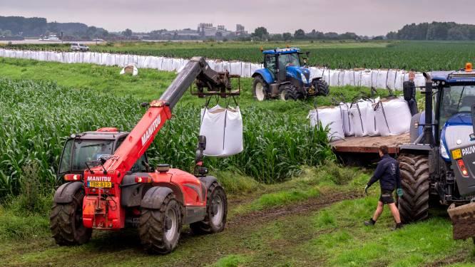 Betuwe wapent zich tegen het wassende water: grote zandzakken moeten landbouwgebied redden