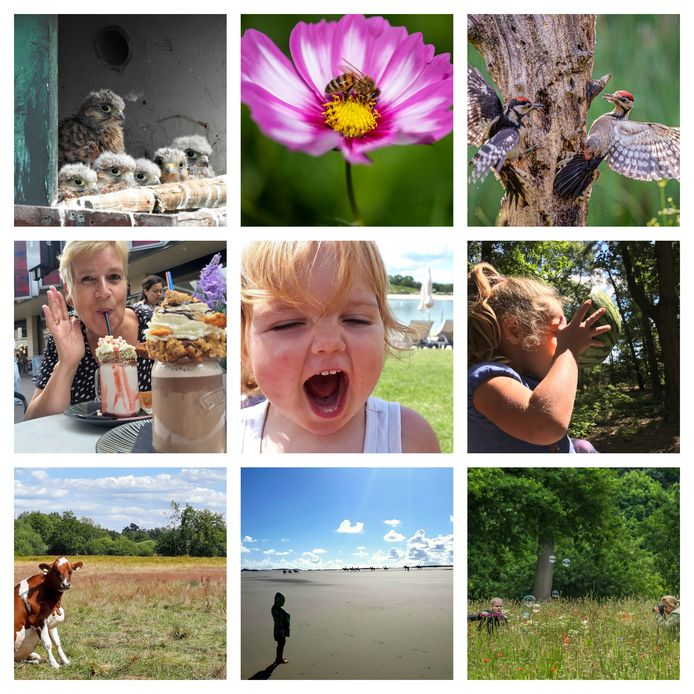 Een selectie van zomerse foto's die ingezonden zijn voor de vierde week van ED Zomerfoto 2020.