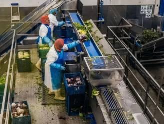 Na miljoeneninvestering Mark Coucke: Greenyard verhoogt winstverwachting opnieuw
