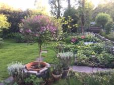 'Tuinieren is voor mij therapie, zo kom ik over alle mogelijke problemen heen'