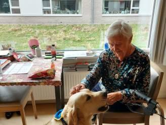 """Woonzorgcentrum in Gentbrugge heeft eindelijk hond na zes jaar wachten: """"Juul is meer dan een gezelschapshond, hij heeft een therapeutische waarde"""""""