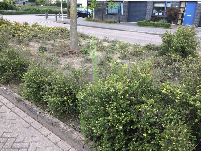 Medewerkers van Reestmond komen in dienst van de gemeente Staphorst om het groen te onderhouden.