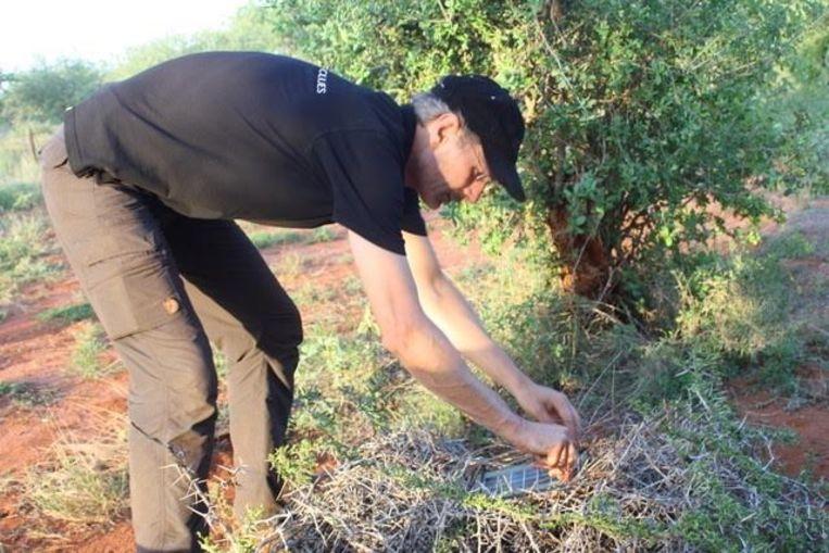 Schakel verstopt een zonnecel voor een sensor in een park in Kenia. Beeld Sensing Clues