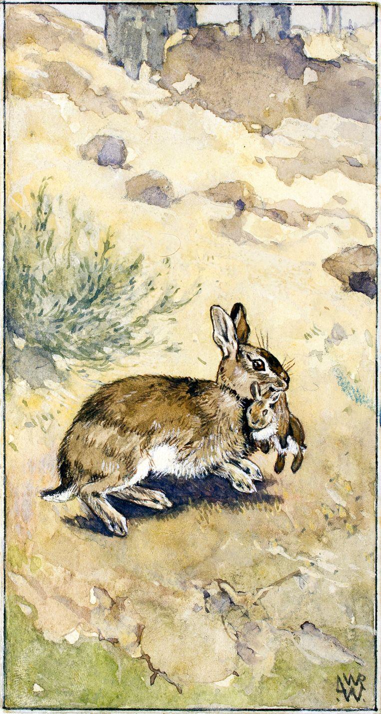 Konijn met jong in de bek op duingrond. Beeld L.W.R. Wenckebach