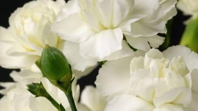 Duiven eert veteranen met witte anjers in Horsterpark