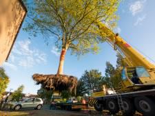 Bomen kappen of behouden in Nieuwehaven? Deze compromis stelt Gouda voor