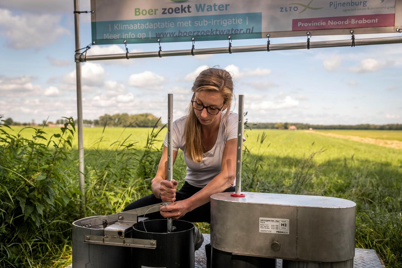 Boerin Jacqueline Ulen bestrijdt op haar land in Asten-Heusden de droogte met een sub-irrigatiesysteem.