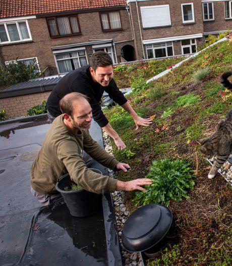 Subsidie voor watervriendelijk inrichten van dak of tuin