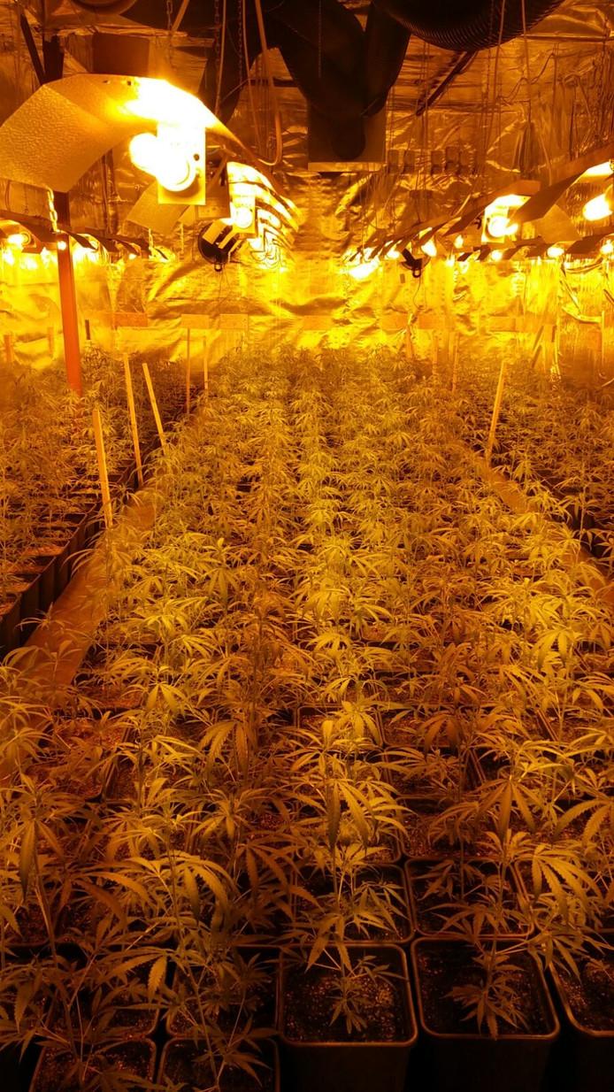 In totaal stonden er 1.843 planten in de kwekerij.