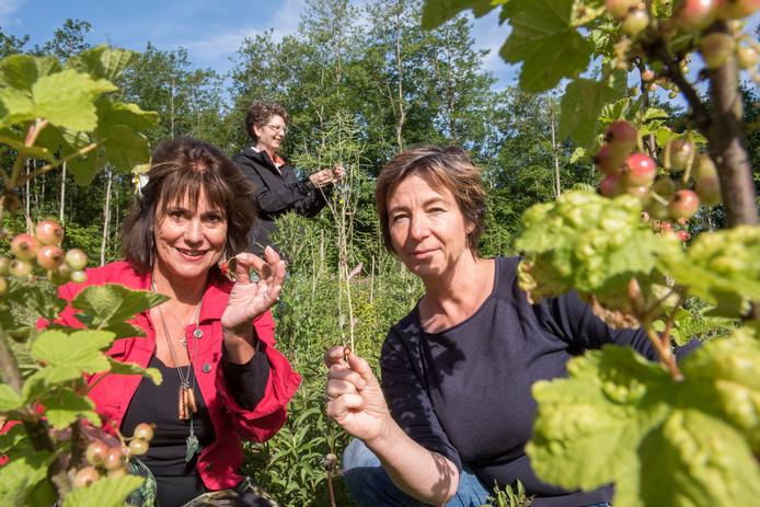 Voedselbos Zeewolde wordt deze week officieel geopend. Lydia Waterreus (l) en Evelyn Derksen tussen de rode bessen, zijn de bedenkers en initiatiefnemers. Op de achtergrond Marleen Wessels, die de fondsenwerving verzorgt.