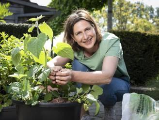"""""""Bramen groeien aan een prachtige klimplant."""" Onze tuinexperte toont welk zomerfruit je in een pot op je terras kan kweken"""