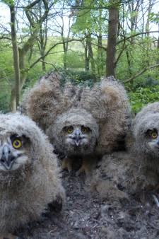 Ze zijn terug in Oost-Nederland, de dieren die zijn uitgezet