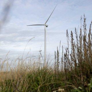 deens-onderzoek--windmolens-vormen-amper-gevaar-voor-vogels