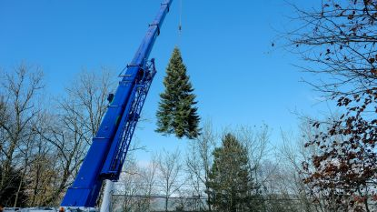 Van de tuin van Berangère naar de Grote Markt: zo komt Brussel aan die prachtige kerstboom