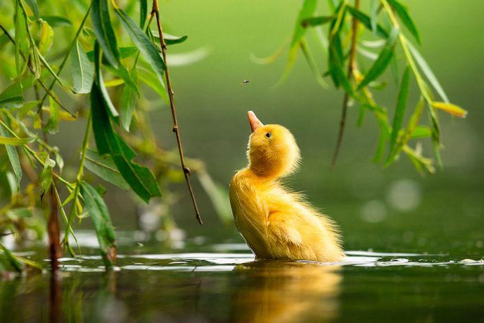 Chaque année, le célèbre Bird Photographer of the Year (BPOTY) présente une savoureuse sélection des plus belles photographies d'oiseaux.