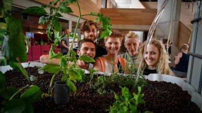 Jongeren bouwen 'aquaponics' in bib