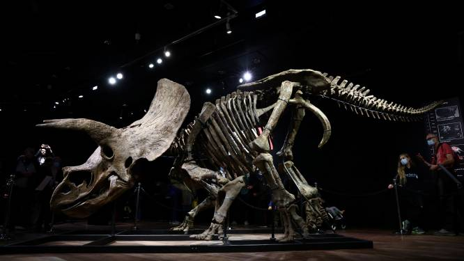 Skelet van grootste triceratops 'Big John' geveild voor 5,5 miljoen euro