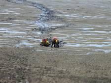 Ree in problemen op wad bij het Friese Sint Jacobiparochie, brandweer start reddingsactie