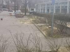 Is 'illegale' bomenkap in Ugchelen onterecht stilgelegd?