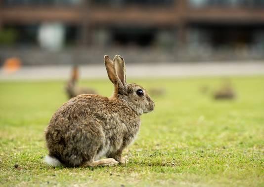 Een konijn in het wild.