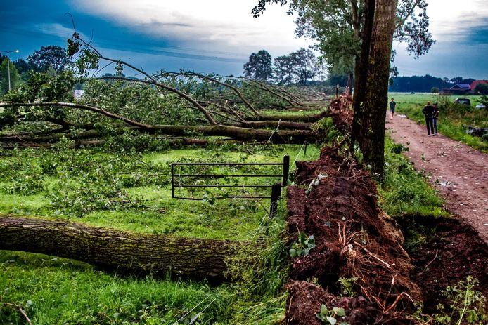 Foto archief. Exact een jaar geleden: ongekend natuurgeweld in Schalkhaar. In Schalkhaar waaien 37 flinke bomen om en ontsnappen vier paarden aan de dood.